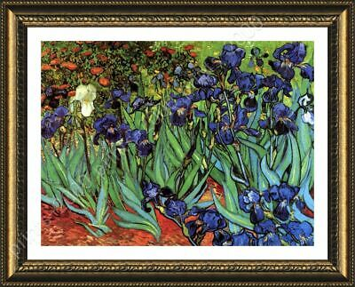 Irises by Vincent Van Gogh | Framed canvas | Wall art oil painting HD print