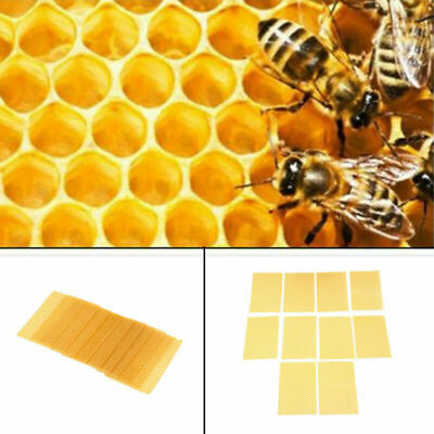 Natural Beeswax Honeycomb Frames Beekeeping Foundation for Bee Nest US STOCK