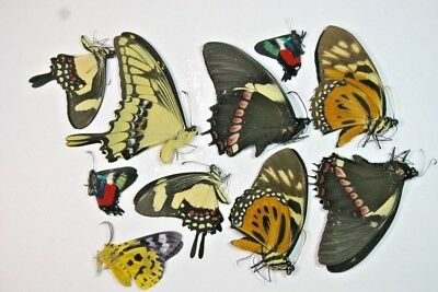 10 Mixed butterflies in A1 condition