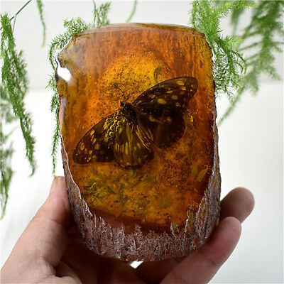 Amber King Fossil Plants Insects Characteristics Butterfly Decorative Pieces