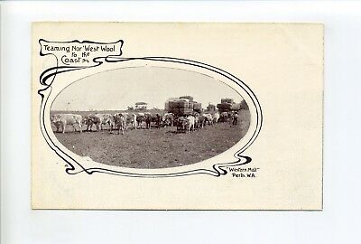 Australia, Perth, Teaming Nor' West Wool, Ox Teams, freight, workers, postcard