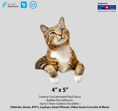 """4"""" x 5"""" Thinking Tabby Cat Vehicle Decal"""