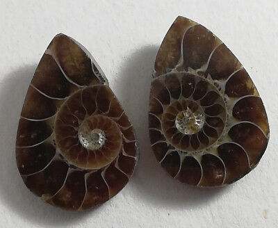 Natural Ammonite  Fossils Shell Pear Size 15.50x19.50mm 1.00 inc. WT.32.20CTS