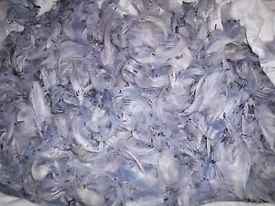 BIODEGRADABLE CONFETTI - Hand dyed feathers - ultimate confetti - Pale Lavender