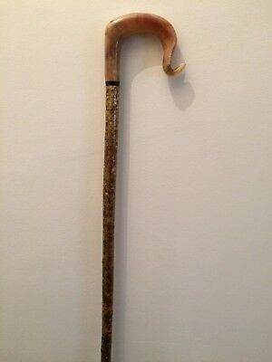 Rams Horn Walking Stick