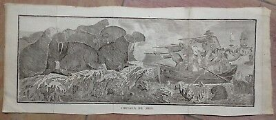 HORSE'S SEA MORSE 1774 JAMES COOK 18e CENTURY LARGE ANTIQUE ENGRAVED VIEW