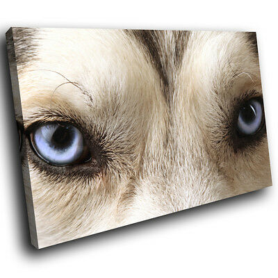 Grey White Wolf Blue Eyes  Funky Animal Canvas Wall Art Large Picture Print