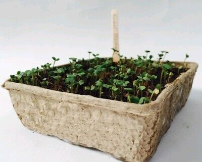X10 Nutley's Biodegradeable Half Size Seed Trays : microgreens  :  compostable