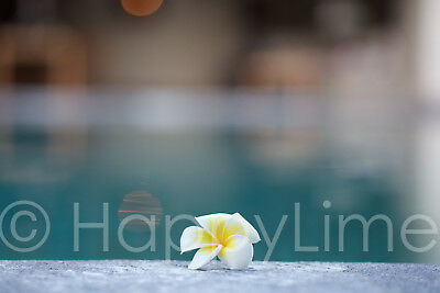 Digital Image Picture Art Photo Wallpaper of Frangipani by the Pool
