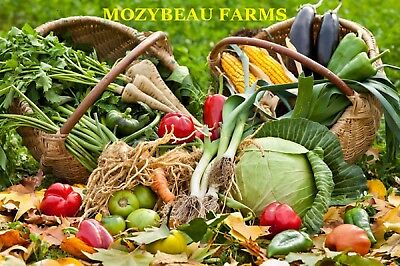 Heirloom Vegetable Seeds! Over 145 Varieties! Only 99 Cents! Combined Shipping!