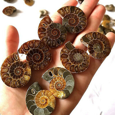 1Pair Half Cut Natural Ammonite Shell Jurrassic Fossil Lucky Healing Stone Gifts