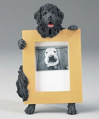 Newfoundland Newfie Dog Picture Photo Frame