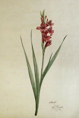 L. Denizot, Gladiolus Flowers - Original 1883 watercolour painting