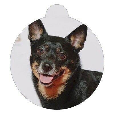 Lancashire Heeler Dog Breed Picture Pet ID tag