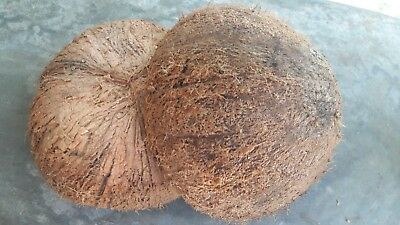2 Natural High-Quality Coconut Shells for Food Bowl,Decorations,Bird Feeder etc