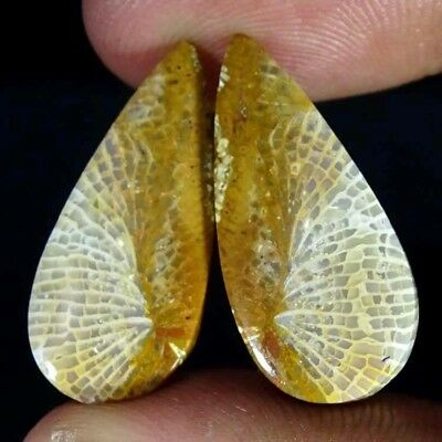 17.20Cts. Bio Fossil coral Pear Cabochon matched pair Gemstone