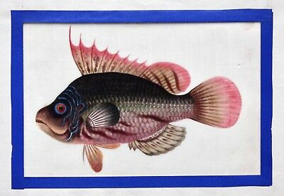 Antique Chinese Trade Gouache Painting on Pith Paper, Study of a Fish, 1840/50