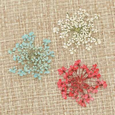 12pcs Pressed Dried Flowers For Resin Jewelry Craft DIY Greeting Cards Making