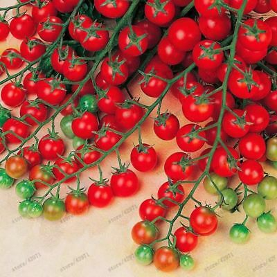 Milk red tomato seeds, cherry tomato seeds organic fruit and vegetable seeds our