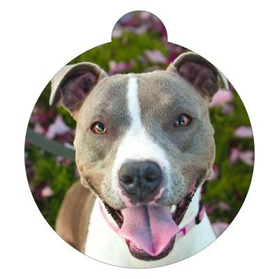 Staffordshire Bull Terrier  Dog Breed Picture Pet ID tag Personalised