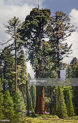 Photos by Getty Images General Grant Sequoia Tree, Kings Canyon Photography