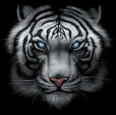 Majestic White Tiger T Shirt, Piercing Blue Eyes, Small - 5X