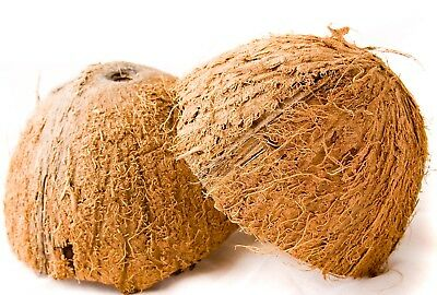 Coconut Natural Half shells Crafts,Toys multipurpose shell Top / Bottom