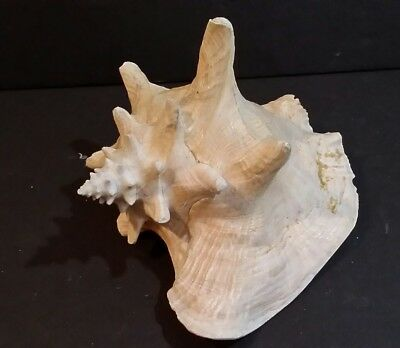 "Vintage Seashell Pink Conch Large King Queen Helmet Sea Shell 8.50"" x 7"" x 6"""