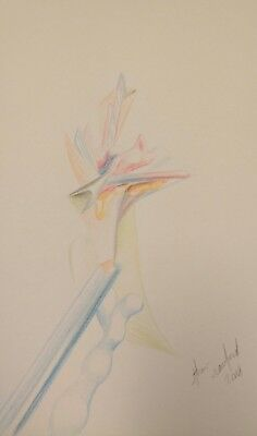 Than Rawford - Blooming - Original Abstract Drawing On Paper