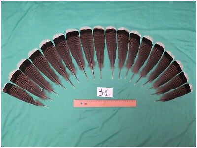 18 Pcs Bronze Turkey Tail Feathers (18-22cm Fiber 40-50mm)  (B-1)