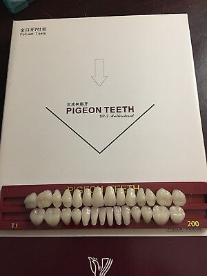 Pigeon Teeth - One Set = Full Mouth Set