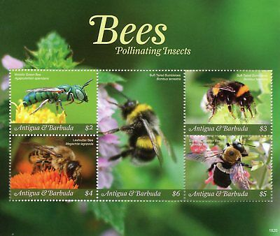 Antigua & Barbuda 2018 MNH Bees Pollinating Insects 5v M/S Bee Stamps