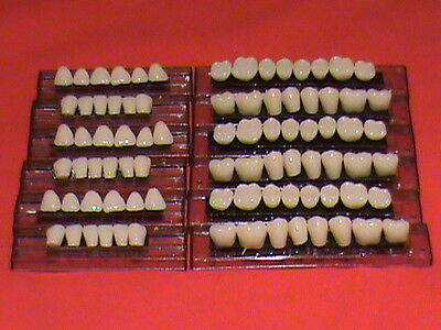 12 Cards Of Acrylic Denture Teeth - Shade A3