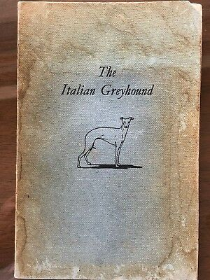 Rare Collector Item: The Italian Greyhound - by E.D Thring