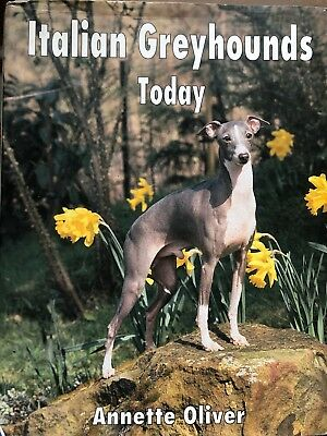 Italian Greyhound Today by A.Oliver