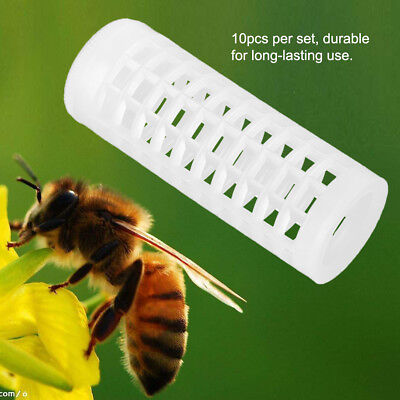 10Pcs Plastic Beekeeping Rearing Cup Queen Bee Lay Cages Beekeepers Protecter A