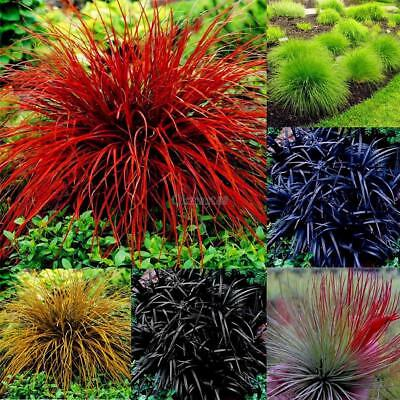 New Nice Adorable Flower Fragrant Blooms Pineapple Grass Seeds OK 05