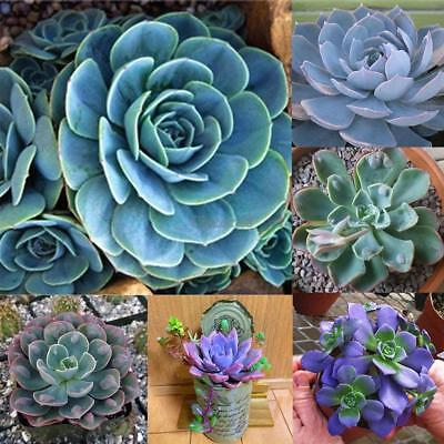 100Pcs 5 Color Succulent Seeds Lithops Potted Cactus Plants Easy to Grow Fash