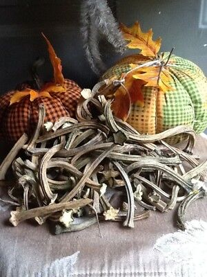 """Pumpkin Stems 50 Excellent Quality Naturally Dried Stems  """"3 - 5"""""""
