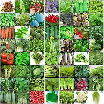 Garden Yard Chinese Vegetable Seeds Colorful retail package 原装彩包春秋播蔬菜种子