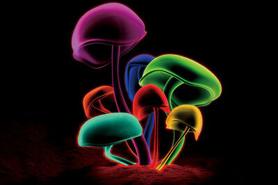 X088 Psychedelic Trippy Magic Mushroom Abstract Art Silk 12x8 40x27inch Poster