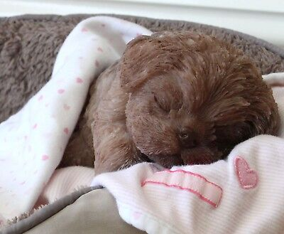 It's a PUPPY Girl! FULL SILICONE Bathable Life Like Reborn Newborn Baby Doll