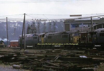 Colour Railway Glossy 6x4 Photo of Diesel Locomotives Class 52 withdrawn @ Laira