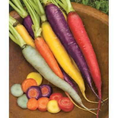 200 Rainbow Carrot Seeds Mix Vegetable Multicolour Garden Purple Red Unique Seed