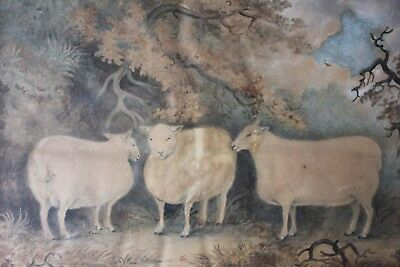Antique Early 19thC Naïve School Watercolour of Three Prize Sheep c.1812