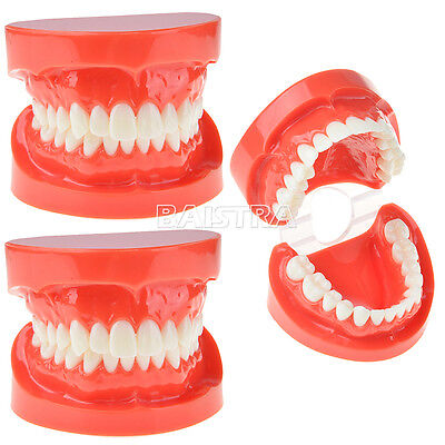 3 X Dental Adult Standard Typodont Demonstration Teeth Model Jaw Model ZYR-7004