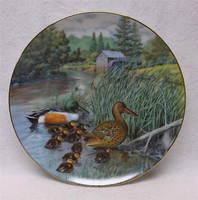Northern Shoveler Collector Plate, 5th Issue of Jerner's Ducks, Wildlife Society