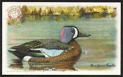 """""""Blue-winged Teal"""" No. 14 Arm & Hammer 1924 """"Series No. 4"""" Game Birds of America"""