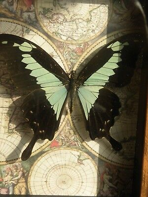 REAL FRAMED moth BUTTERFLY  MOUNTED SHADOWBOX lot ART GIFT INSECT