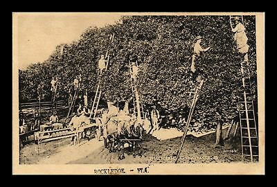Dr Jim Stamps Us Picking Oranges Rockledge Florida Topical View Postcard